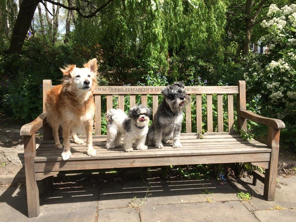dogs_on_bench