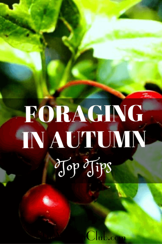 foraging-in-autumn