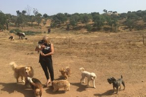 Louise Coppin's life of dog rescue in Portugal