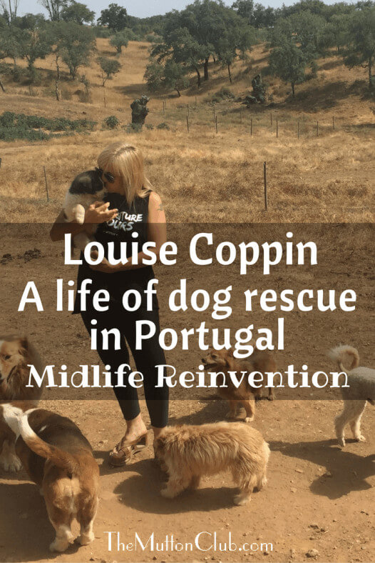 louise-coppin-dog-rescue-in-portugal