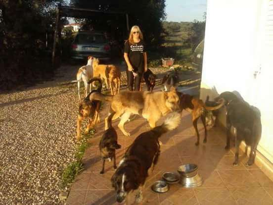 dog rescue in Portugal