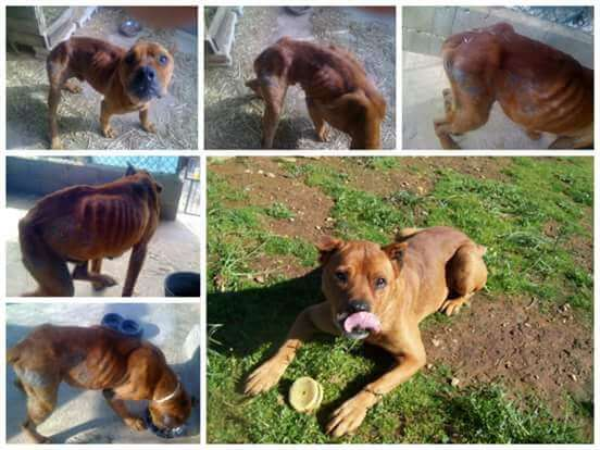dog rescue in Portugal